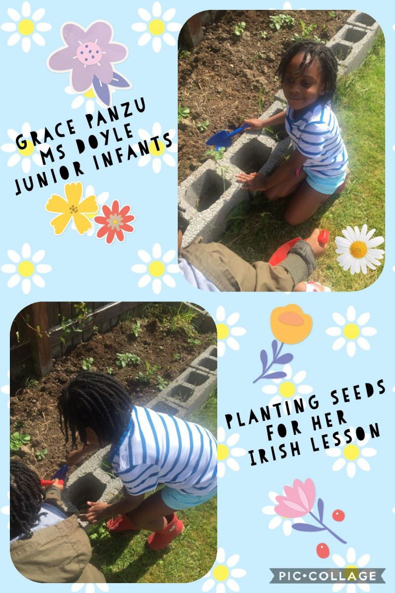 Grace Panzu from Junior Infants was busy planting outside